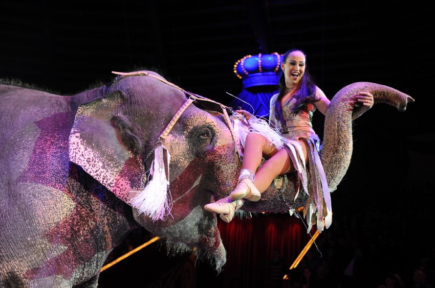 MUNICH, GERMANY - DECEMBER 25: Jana Mandana performs with her elephants during the 'Circus Krone Christmas Show 2014' at Circus Krone on December 25, 2014 in Munich, Germany. (Photo by Hannes Magerstaedt/Getty Images)