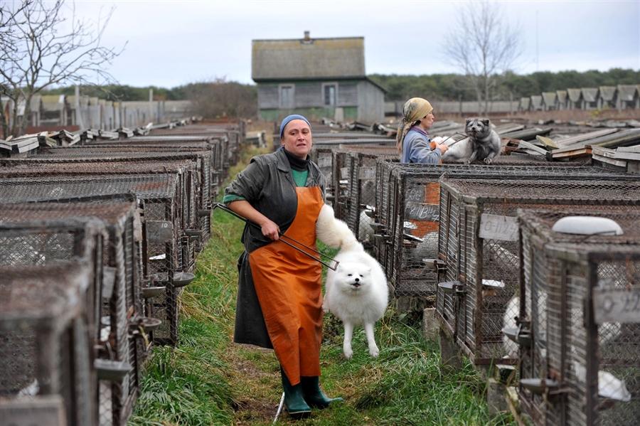 pb-11111-pelt-farm-birkett.photoblog900