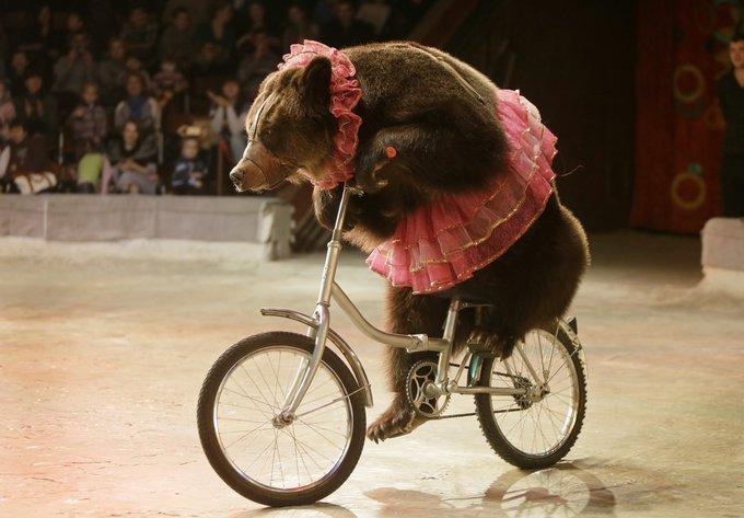 08_circus